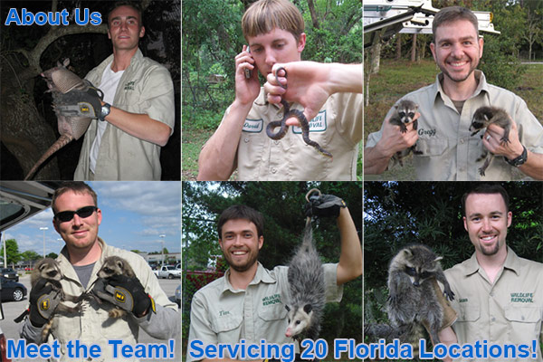 About Us Critter Pest Control In Florida