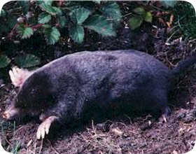 Florida Mole Removal And Pest Control Orlando Fl