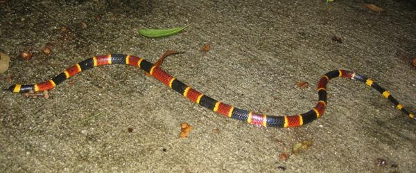 Off Lease Orlando Fl >> Florida Snake Removal and Pest Control - Orlando FL